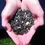 Seeds-150x150